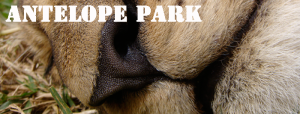 antelope-park-image-link